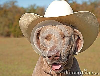Weimaraner dog in a cowboy hat