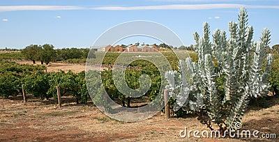 Weinberg und Weinkellerei