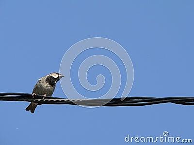 Weinig vogel met blauwe hemel 2