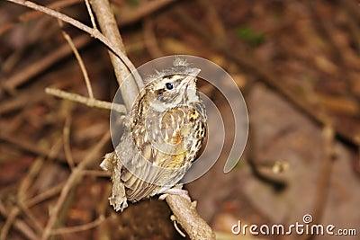 Weinig vogeltje op de tak van boom