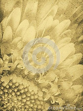 Weinlese-Gänseblümchen-Abdruck