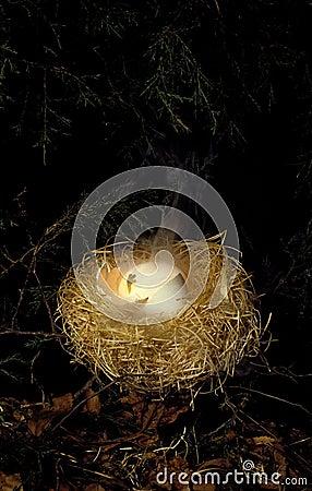 Free Weird Alien Hatching Stock Photos - 29474843