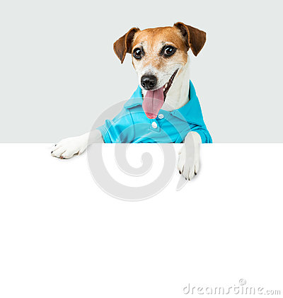 Free Welcoming Dog Jack Russell Terrier Royalty Free Stock Photos - 66355328