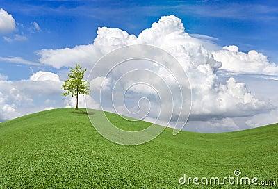 Wellenförmiges Frühlings-Feld