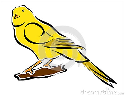 Wellow canary