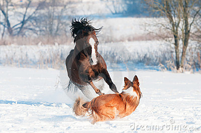 Welsh pony and dog playing in the winter