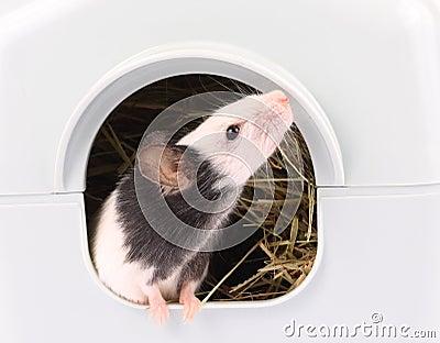 Die kleine Maus, die aus sie herauskommt, ist Loch