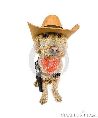 Western dog