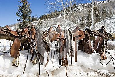 Western Saddles on a Rail