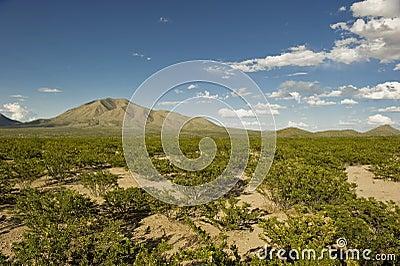 Western Texas landscape