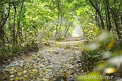 Wet autumn forest road