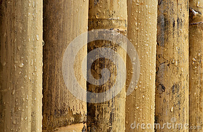 Wet Bamboo