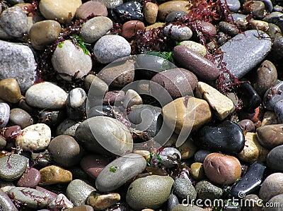 Wet Beach Stones