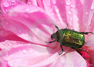 Wet beetle