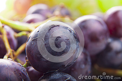 Wet Black Grapes