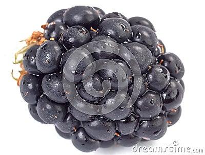 Wet blackberry