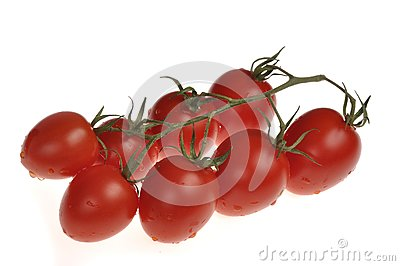 Wet cherry Tomatos on the vine