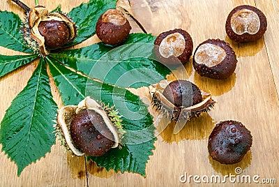 Wet Chestnuts