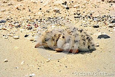 Wet Chick