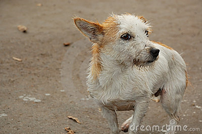 Wet and dirty stray dog