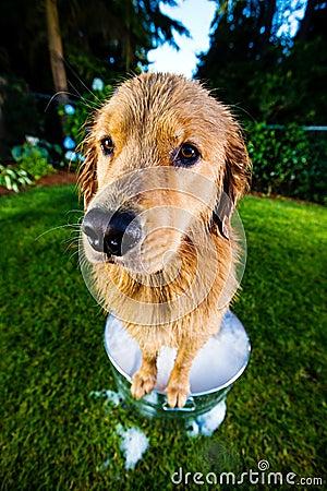 Wet Dog in a bubble bath