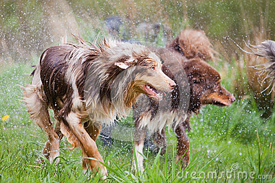 Wet dog pack