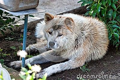 Wet dog portrait