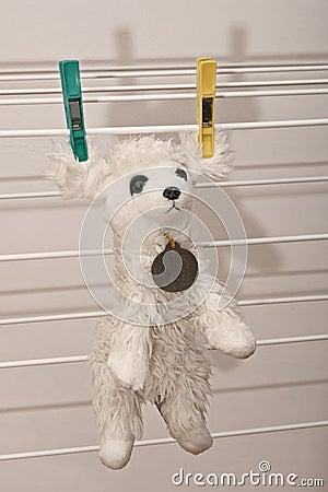 Wet dog toy