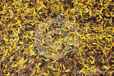Wet Fall Leaves
