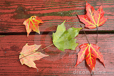 Wet Fall Leaves on  redwood
