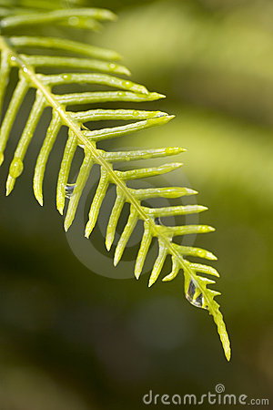 Free Wet Fern Stock Images - 626894