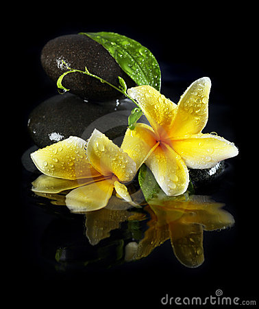 Free Wet Flowers On Stones Royalty Free Stock Images - 17813979