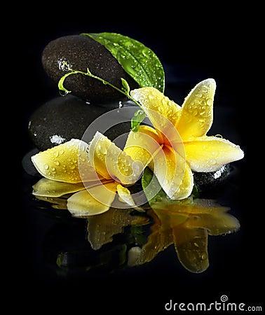 Wet flowers on stones