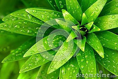 Wet Foliage