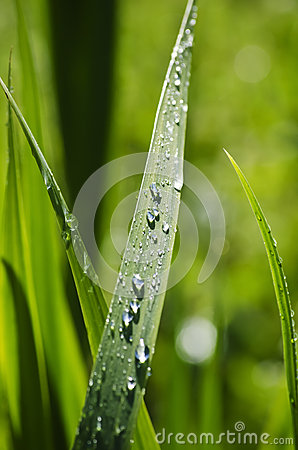 Free Wet Grass Stock Photo - 48106500