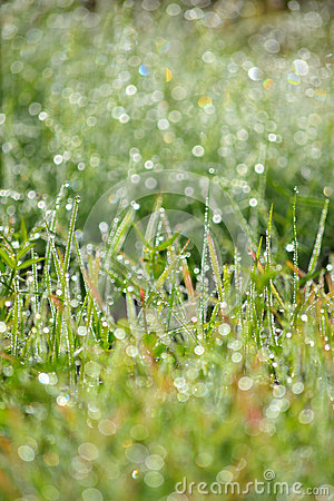 Free Wet Grass Bokeh With Drops Stock Photography - 29805902