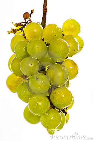 Wet green grapes on white