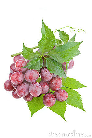 Free Wet Juicy Red Grapes Stock Photography - 2661852
