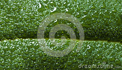 Wet green leaf covered with dew background or text