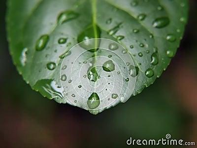 Wet leaf macro 4