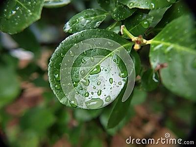 Wet leaf macro 5