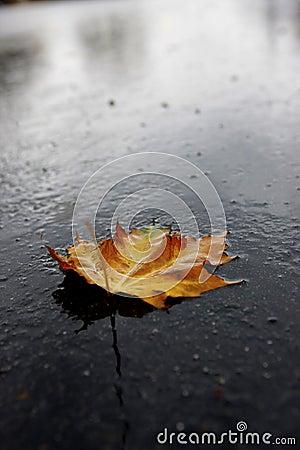 Wet leaf on road.