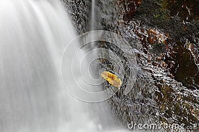 Wet leaf on rock.