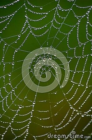 Free Wet Net 7 Stock Photos - 758913