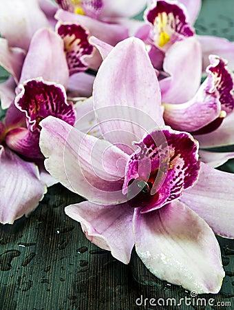 Wet orchids
