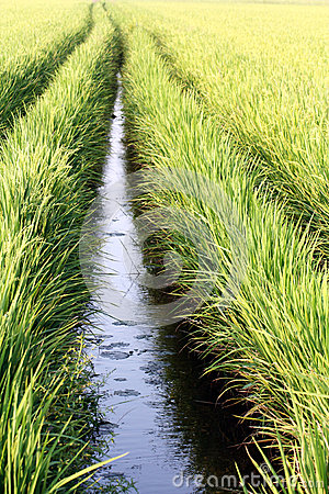 Wet Paddy Field Irrigation System