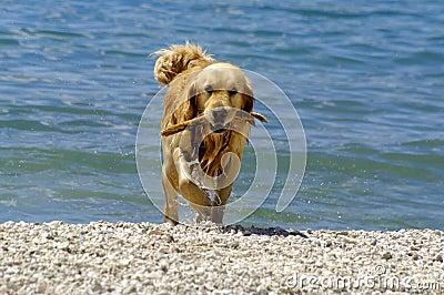 Wet pet - dog