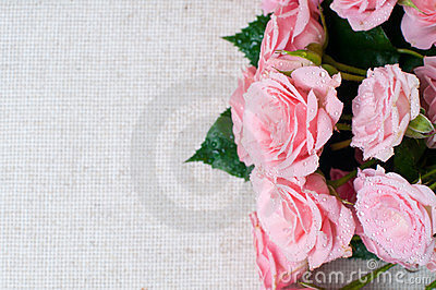 Wet pink roses on a gray linen fabric