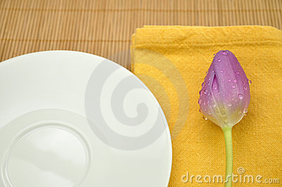 Wet Purple Tulip and a Plate