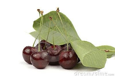 Wet red cherries and green leaves